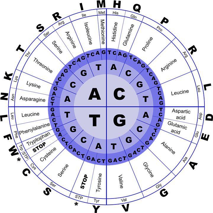 Acide Désoxyribo-Nucléique, une molécule complexe qui en dit long !